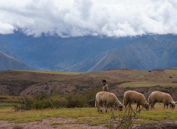 Moray - Cusco - Pérou