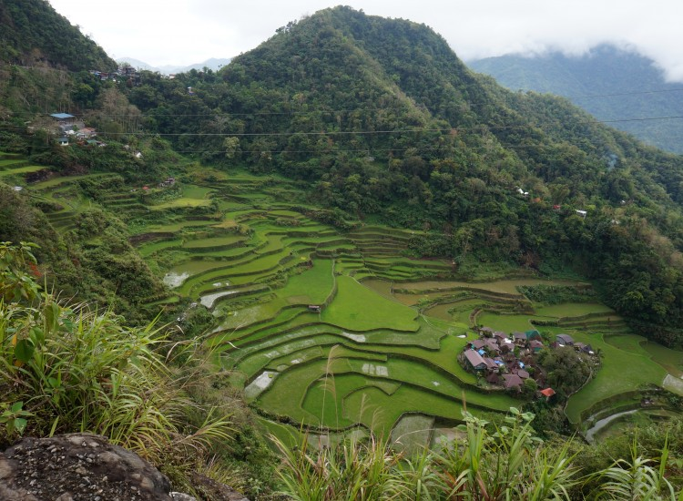 Bagna-an -rizières Luzon - Philippines