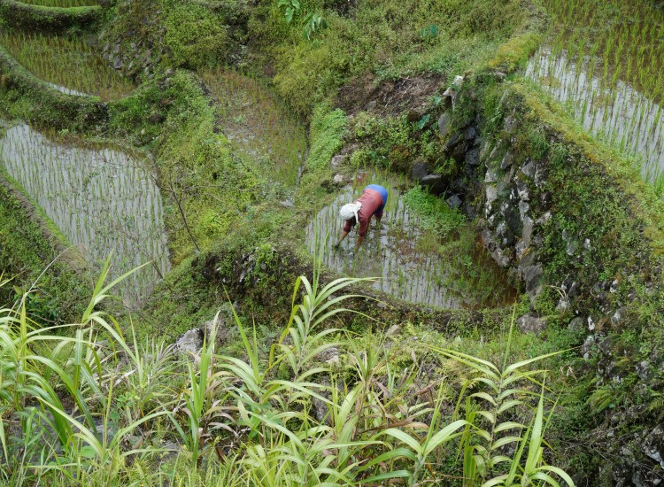Trek Rizières entre Batad et Cambulo - Philippines