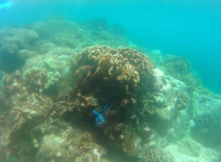 Apo Island - Negros - Philippines