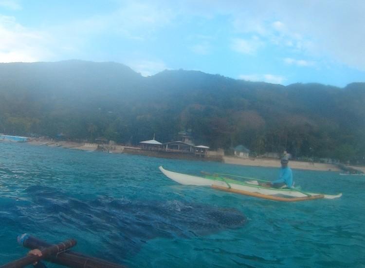 Requins baleine oslob - Philippines
