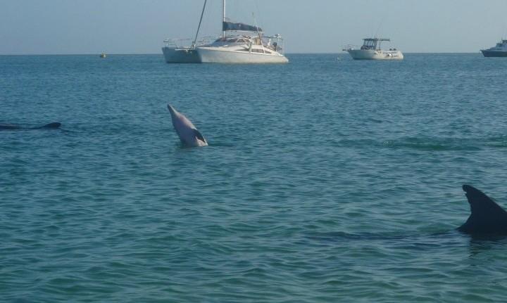 Monkey mia dolphin australie