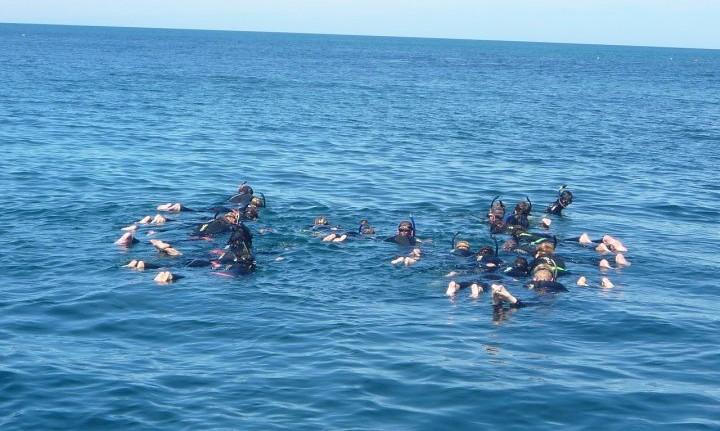 Sud perth dolphin