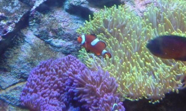 sydney aquarium et wild life - Australie