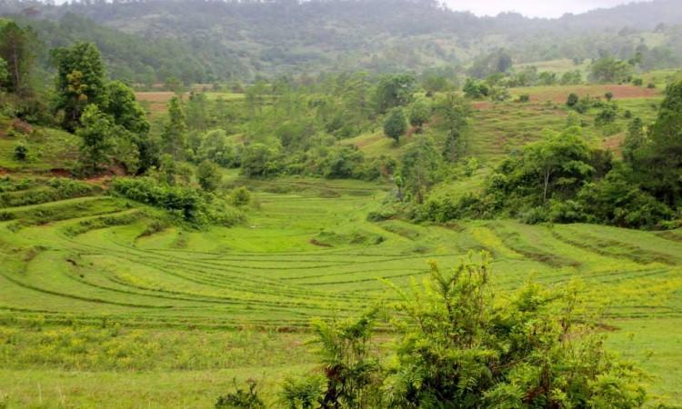 Rizières - Trek Pays Shan - Birmanie