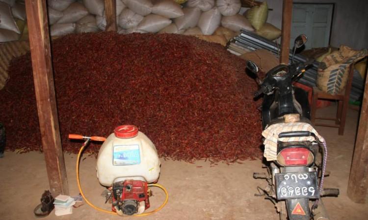 récolte piments - Trek Pays Shan - Birmanie