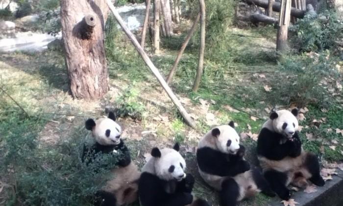 Chengdu - Chine