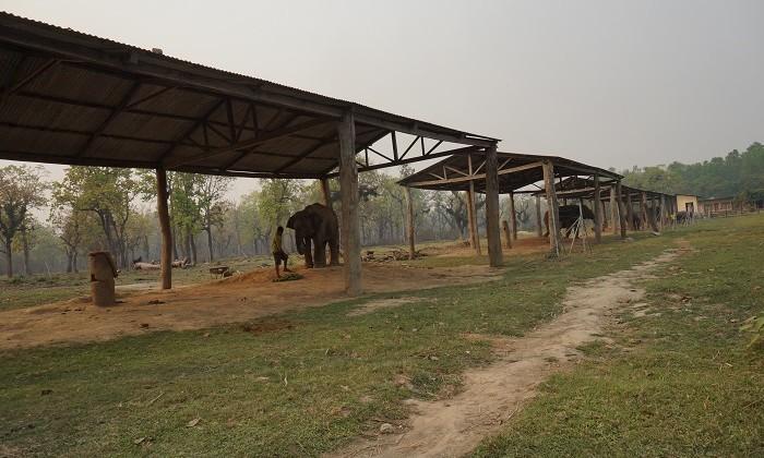 Elephant - Chitwan - Népal