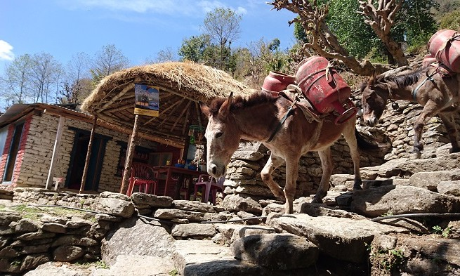 Way to Gorepani - Annapurnas - Népal