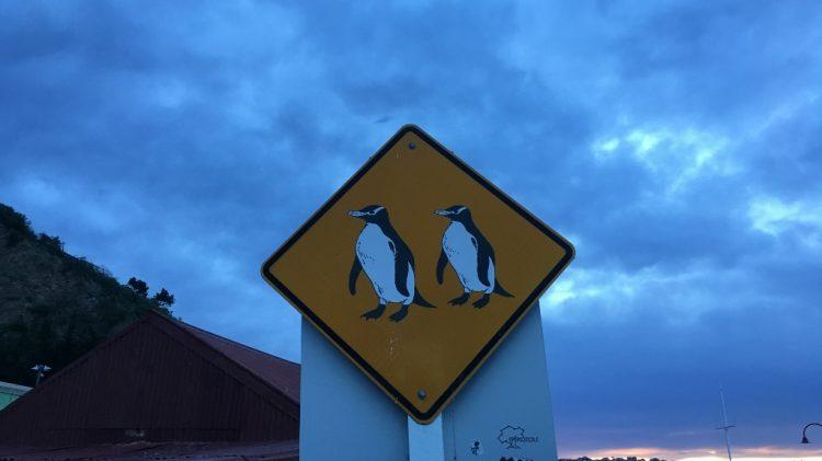 Oamaru et les pingouins - Nouvelle Zélande