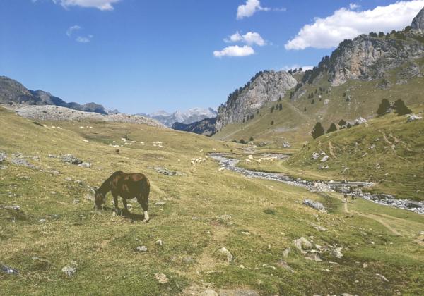 Randonnée Pyrénées lac ayous, cheval dans la vallée