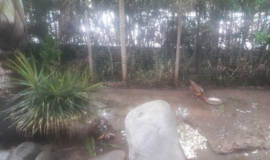 Centre de tortues - la Réunion