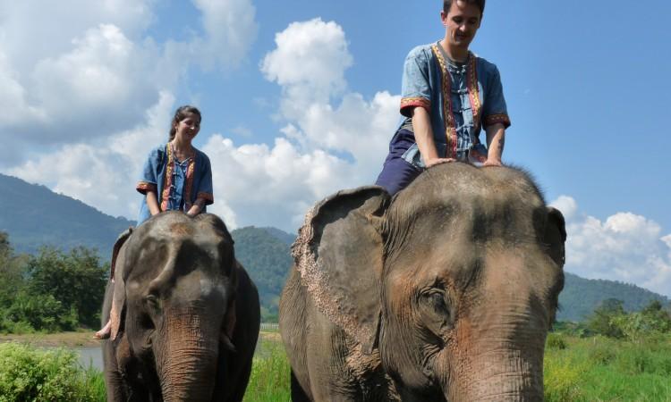 Eléphants - Chian Mai - Thailande