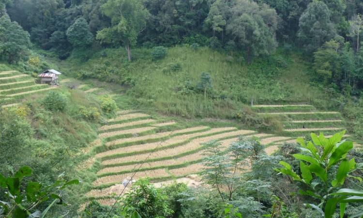 Chian Mai - Thailande